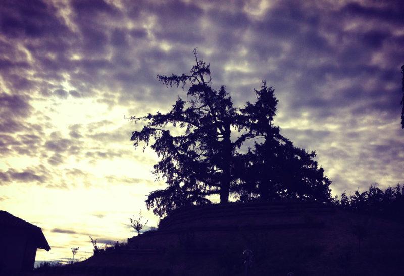 La collina dei Pini