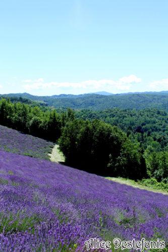 Le colline viola